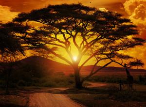 Wunderbaum Moringa